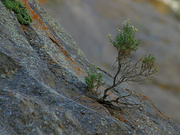 tree learning to grow in a rocky crag